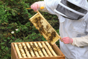 Image representing the news: S4S-1019-A007_Talking Honey Bees
