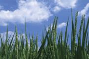Image representing the service provider: Environmental Health Service (06-02-2013_2103)