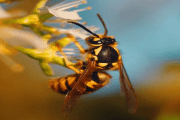 Image representing the service provider: Wasp (27-09-2019_1540)