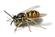 Image representing the service provider: Pest Control (05-02-2014_1748)