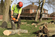 Image representing the service provider: Landscape, Grounds - Chain Saw (24-02-2017_1128)