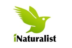Image representing the news: RWC-0319-A001_inaturalist new