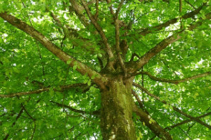 Image representing the service provider: tree (20-09-2013_1604)