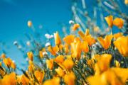 Image representing the service provider: Yellowflowers-unsplash (03-03-2020_0837)