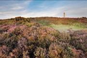 Image representing the service provider: South Dorset (30-12-2014_1119)